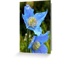 The Colour of Sky! - Himalayan Poppy - NZ Greeting Card