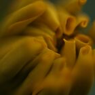 Dreamy Yellow by camohamo