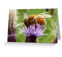 My Rose, Your Weed - Bee on Thistle - NZ Greeting Card