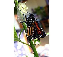 Walk The Line! - Monnarch Butterfly - NZ Photographic Print