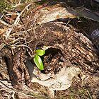 Tincan Mangrove by Juliana Warne