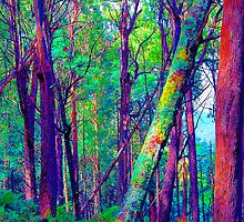 Psychedelic RainForest Series #5 - Yarra Ranges National Park , Marysville Victoria Australia by Philip Johnson