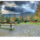 Whinlatter Forest in Autumn by horrgakx