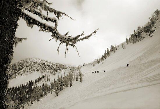 WhiteWater Avalanche fields by Robert Mullner
