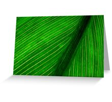 Nature's Pin Stripe Greeting Card