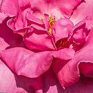 Elegance; rose petals  by Kornrawiee