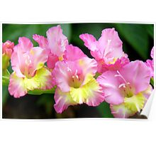 An Admiral  Spray Of Gladness! - gladiolus - NZ Poster
