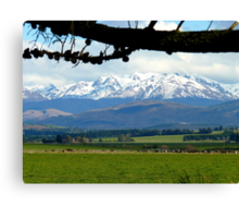 The Grazers View.. Mossburn Dairy Farm - NZ Canvas Print