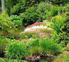 Reawaken Nature's Serum - Maple Glen Gardens - NZ by AndreaEL