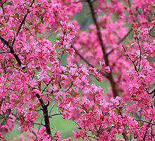 Pink by Vincent Vartorella