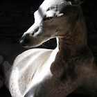 Italian Greyhound in Light by Rebekah  McLeod