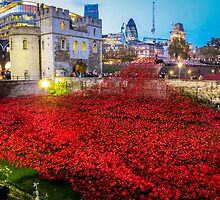 Poppies Tower Of London by StephenRphoto