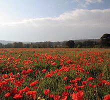 Poppy Field. by NKSharp