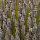 Banksia men by Ben Shaw