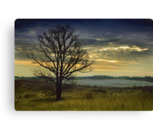 The lonely Oak in the Winter Canvas Print