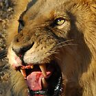 Roar! by Caroline Bland