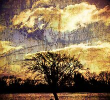 Tree by Kalena Chappell