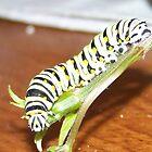 Caterpillar by Kadava