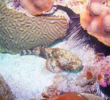 Spotted Scorpionfish by Jarda