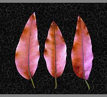 Gum Leaves #231 by Bevellee