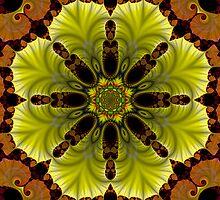 Spider Blossom by Dave Moilanen