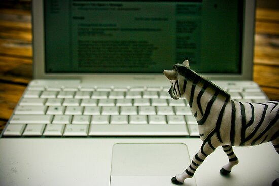 Mr. Zebra Check His Email by Damian Silliman
