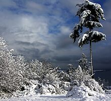 Oak Harbor Snow Tree by Rick Lawler