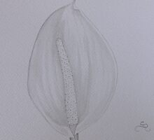 Peace Lily by Donna Mearns