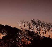 Port Macquarie Sunset I by Mark Moskvitch