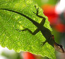 Shadow Lizard by Lucy Hollis