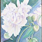White Peonies by Carolyn Bishop