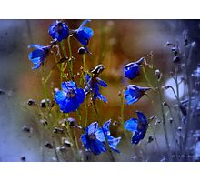 Summer blues Photographic Print
