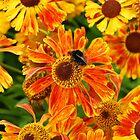 Bee on Flower by wesleyj1954