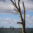 Lake Mulwala NSW by Michael Eyssens