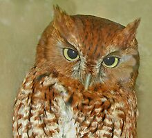 eastern screech owl by mimbravastudio