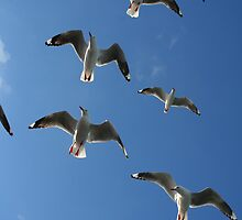 The Birds! by Michael Eyssens