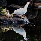 Follow Me  Toowoomba Qld Australia by Sandra  Sengstock-Miller