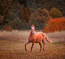 The Russian Don horse by Julia Shepeleva