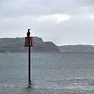 Cormorant's View of Lyme Dorset UK by lynn carter