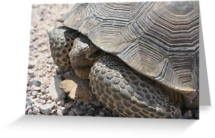 Nevada Tortoise by Chris Clarke