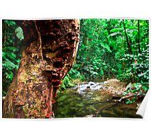 Rainforest Creek, Paluma. Poster