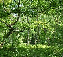 Ancient English Woodland by InterestingImag