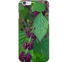 beauty berry- Everglades iPhone Case/Skin