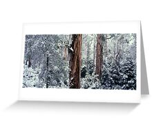 Silent Forest Greeting Card