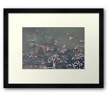 California Newts 2 Framed Print