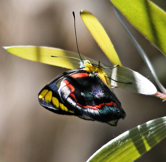 Multicolored Butterfly by EbonyKate