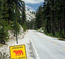 Speeding Kills Bears by Chris Clarke