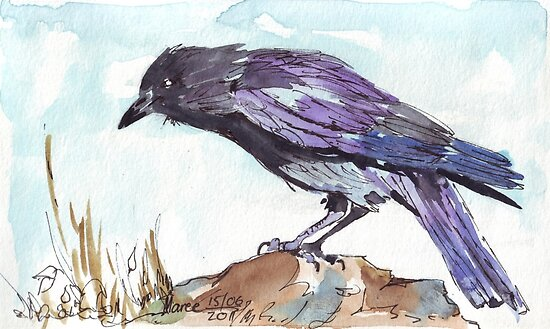 The playful Crow by Maree  Clarkson