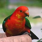 King Parrot by ben14