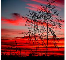 Templestowe Sunset Photographic Print